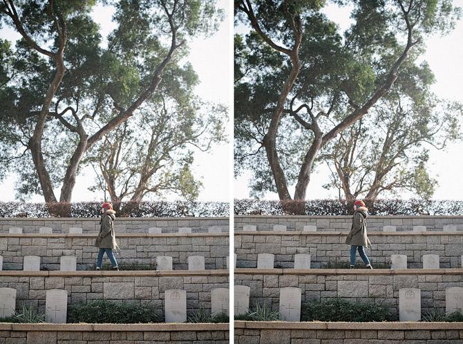 trees-hong-kong